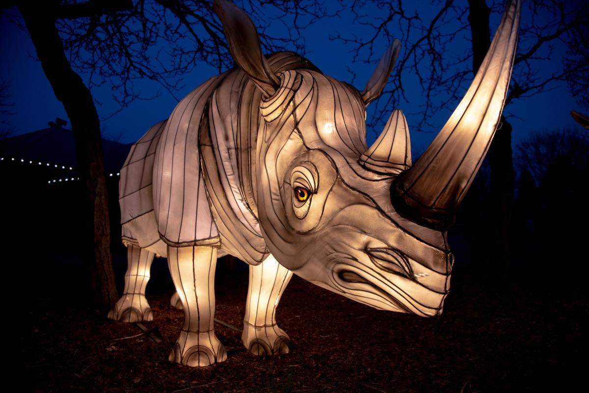 Asian Lanterns rhino