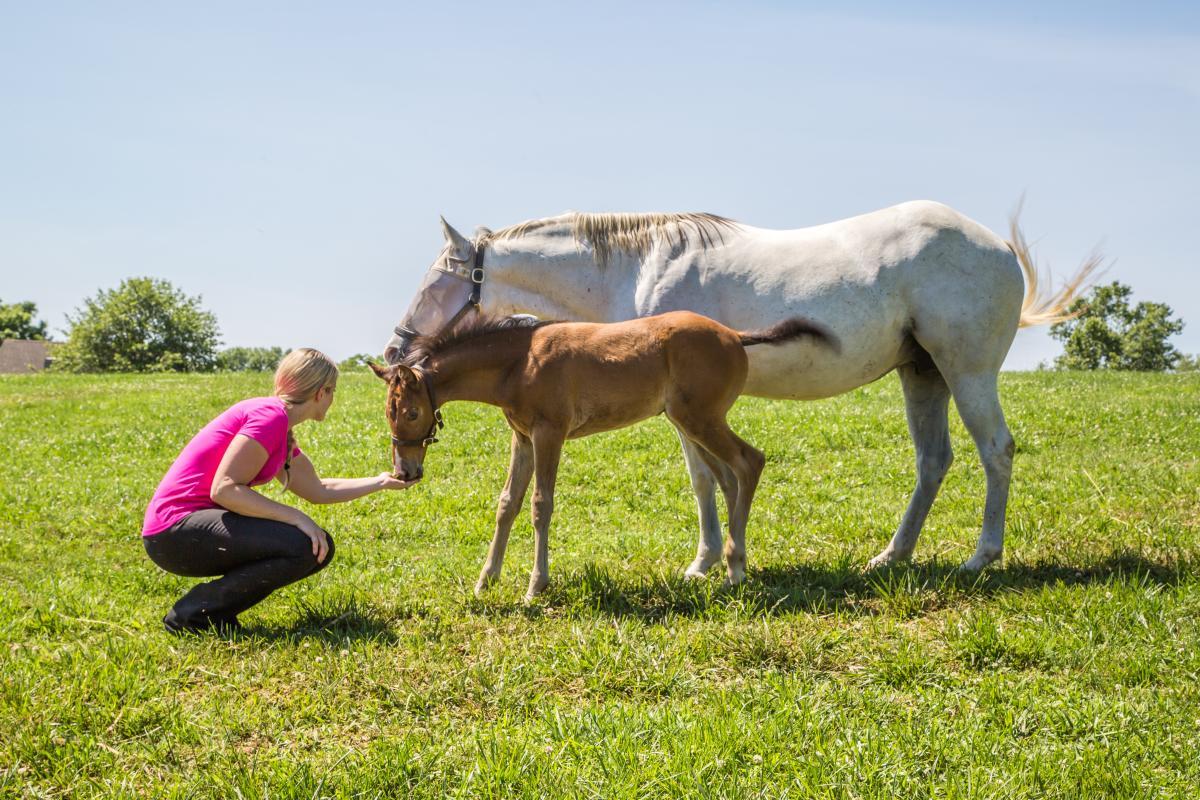 Kismet Farm Horses