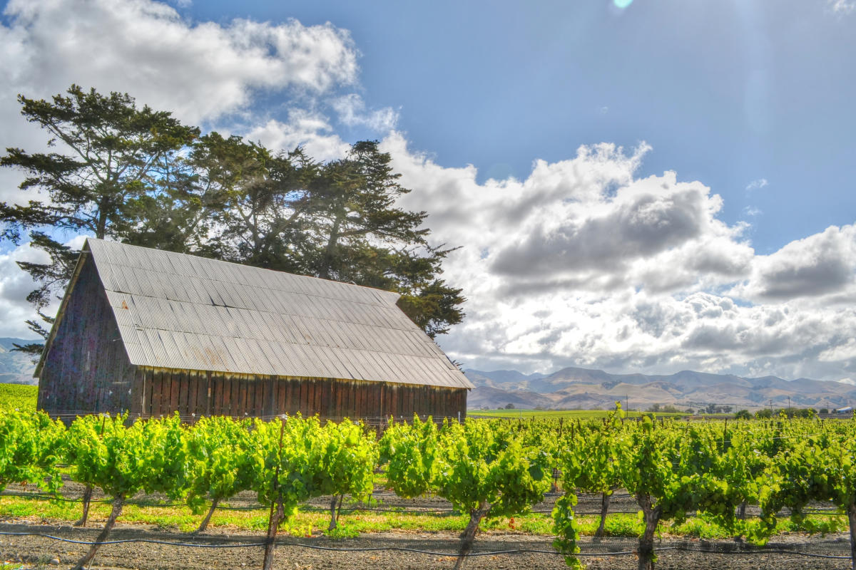 Edna Valley Vineyard and Barn