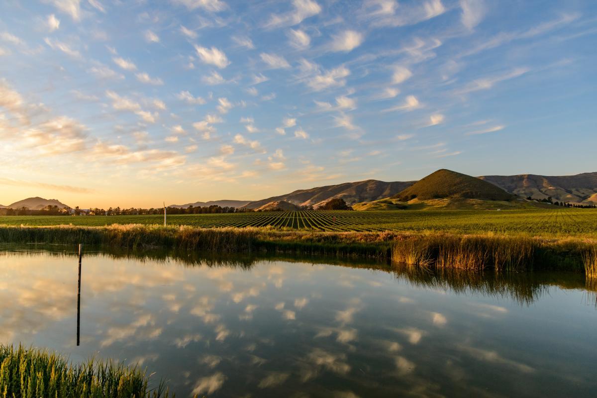 Tolosa Irrigation Eco : Photo Duane Hill