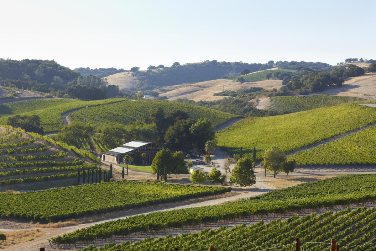 Rolling Hills Of Paso Robles Wine Country In San Luis Obispo