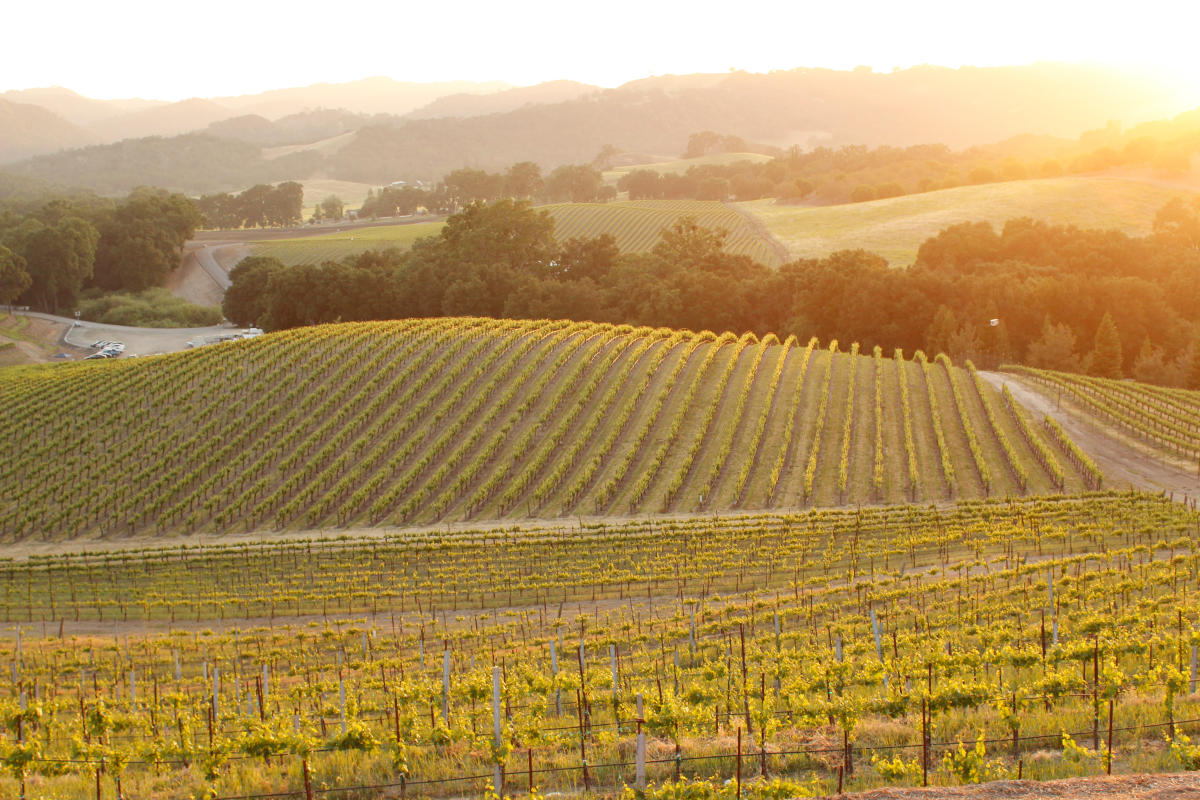 Vineyard sunset in Paso Robles