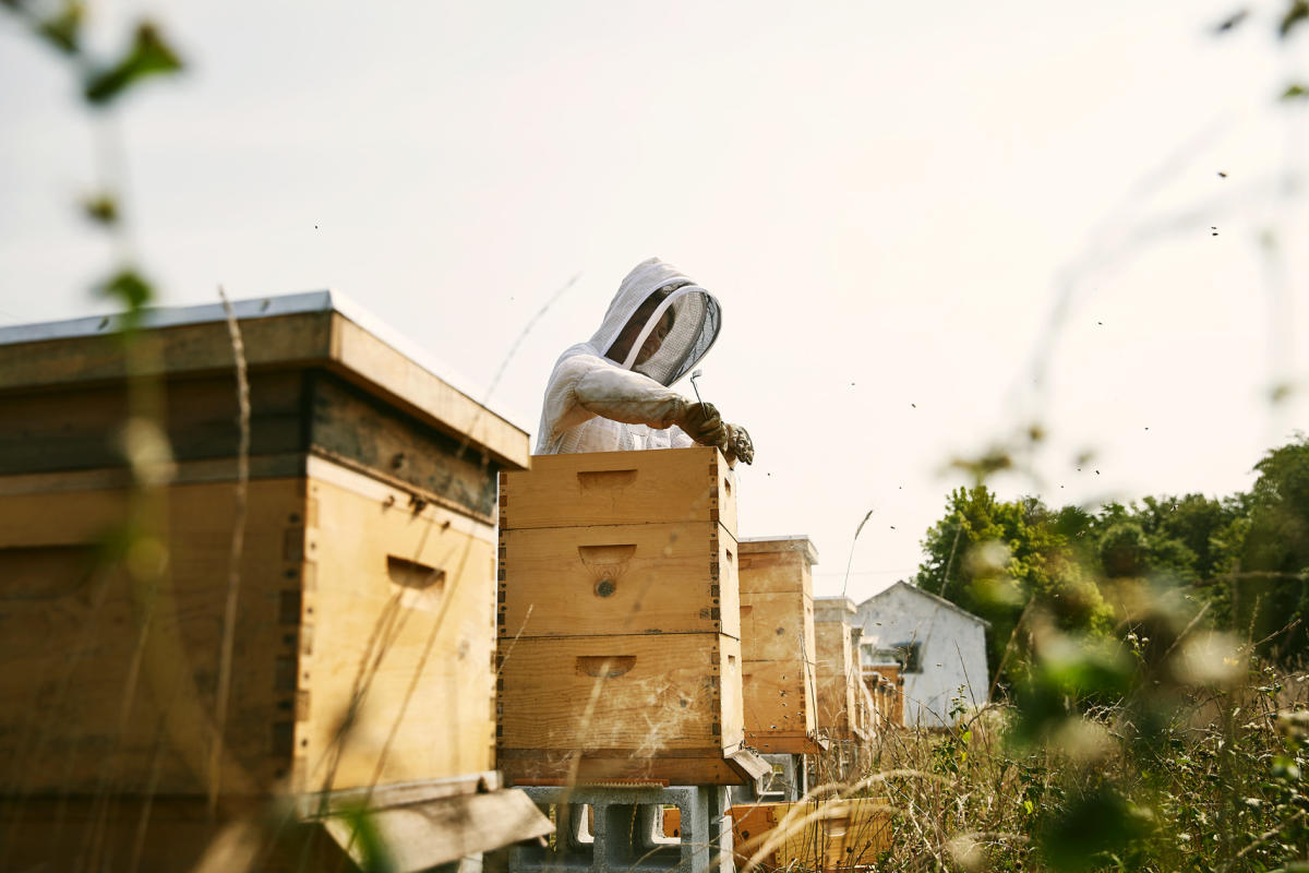 Beekeepers at Finley Farms