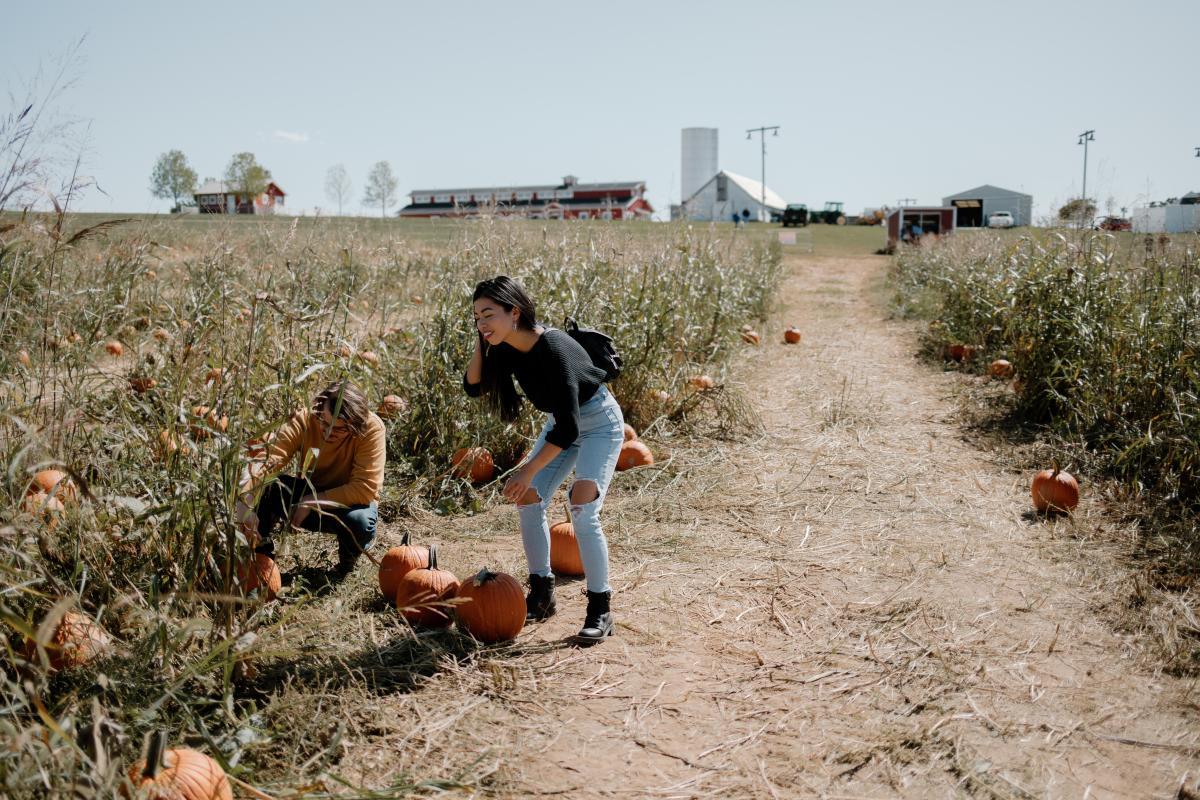Rutledge Wilson Farm Park Pumpkin Patch