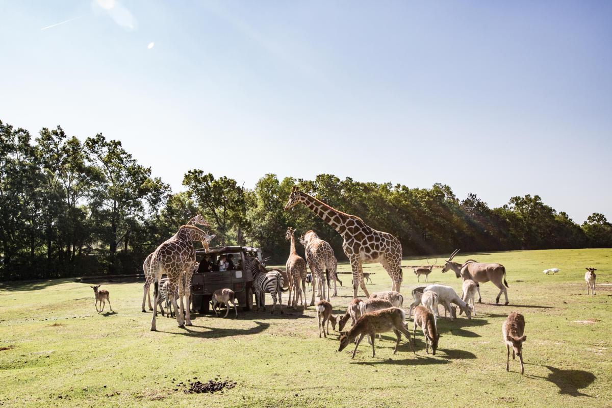 Animals surround wagon at Global Wildlife, Folsom