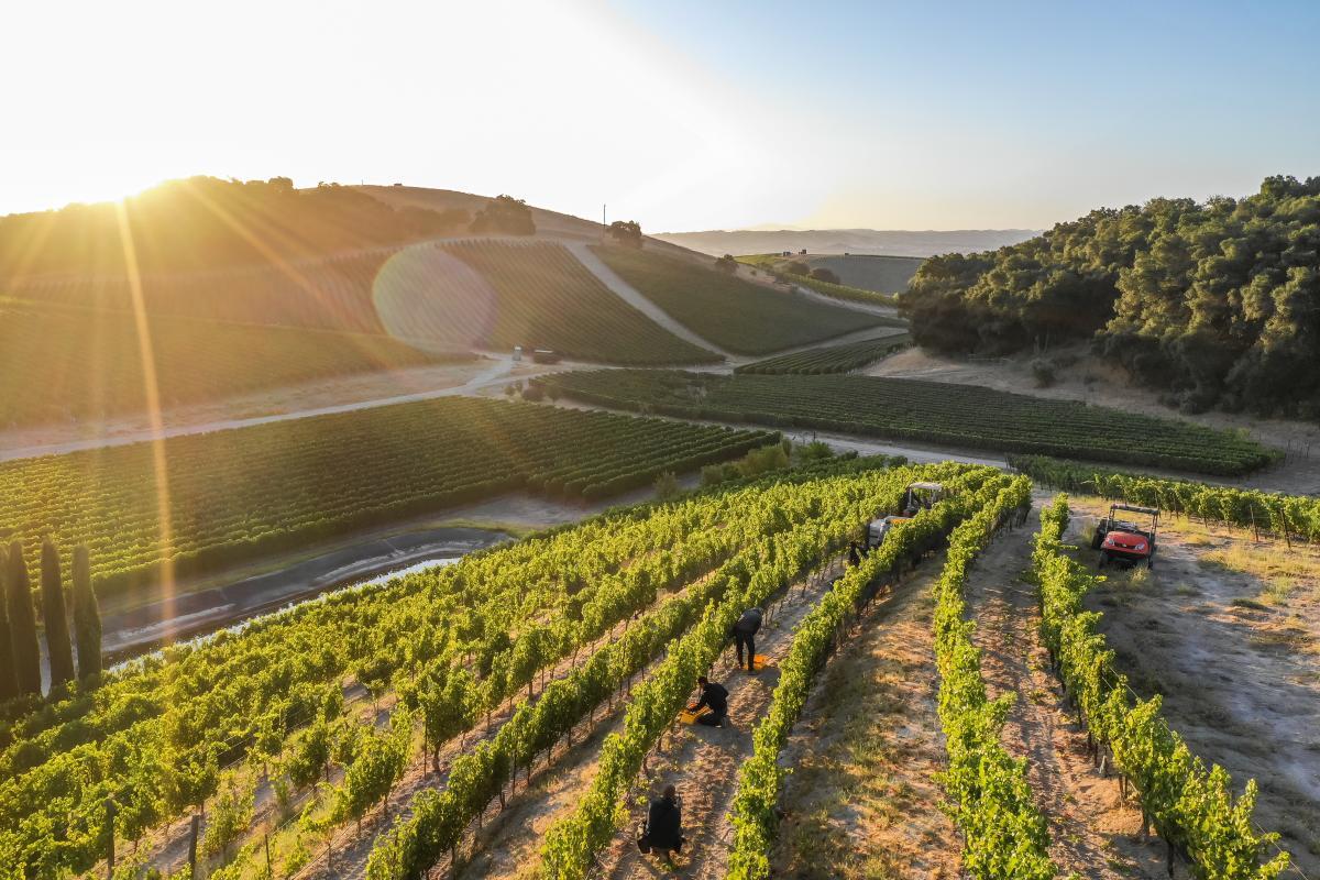 L'aventure Vineyard sunset