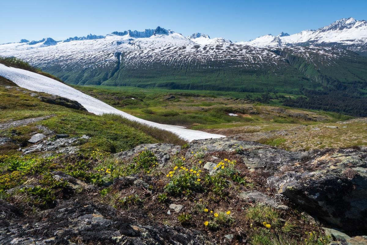 snow and wildflowers in a mountain pass