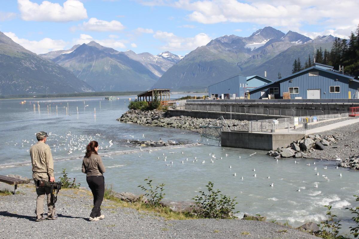The Solomon Gulch Fish Hatchery in Valdez, Alaska