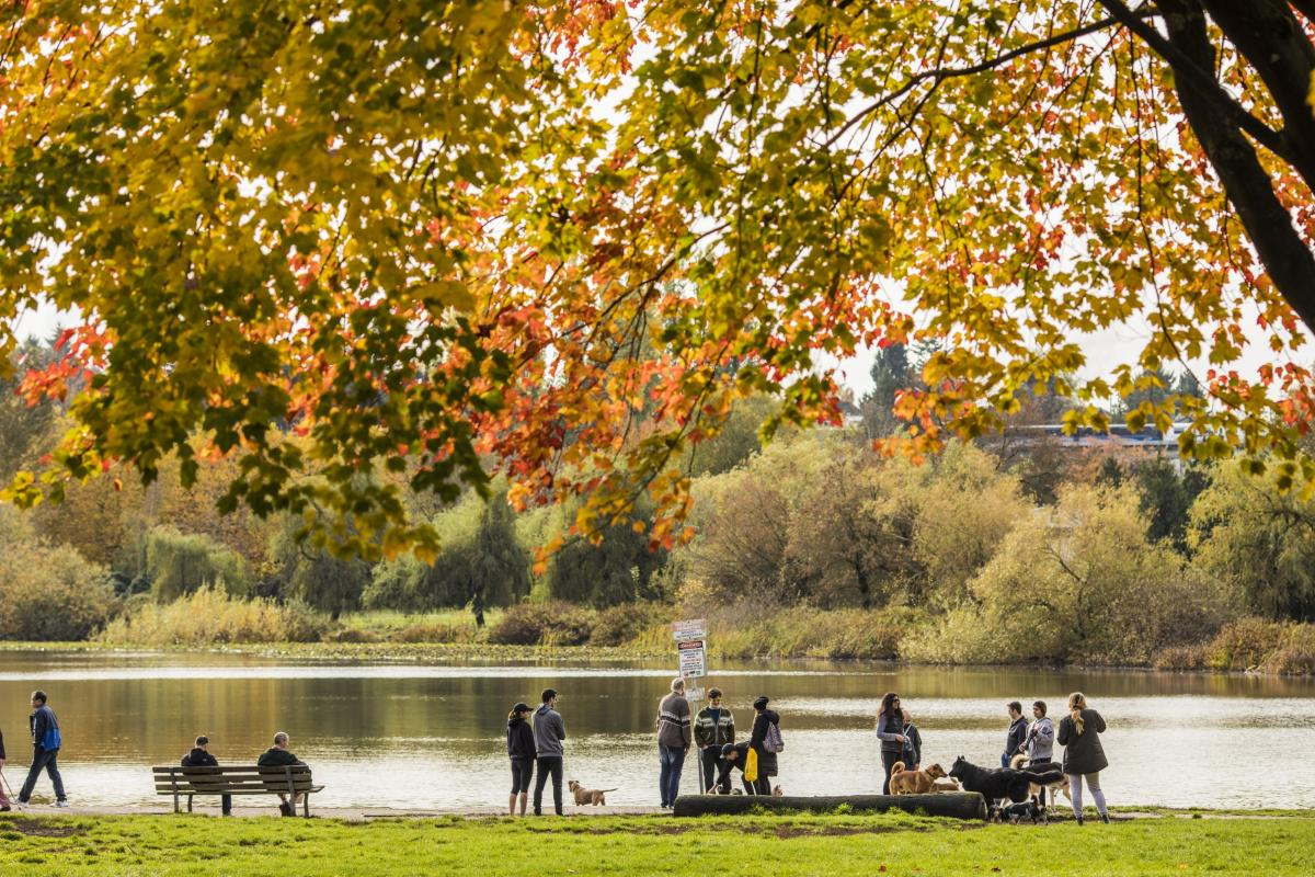 Fall at Trout Lake / Commercial Drive