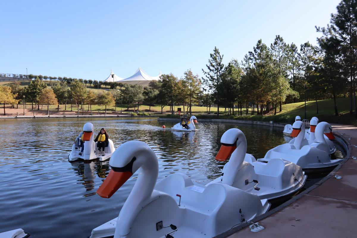 Swan Boats on The Woodlands Waterway