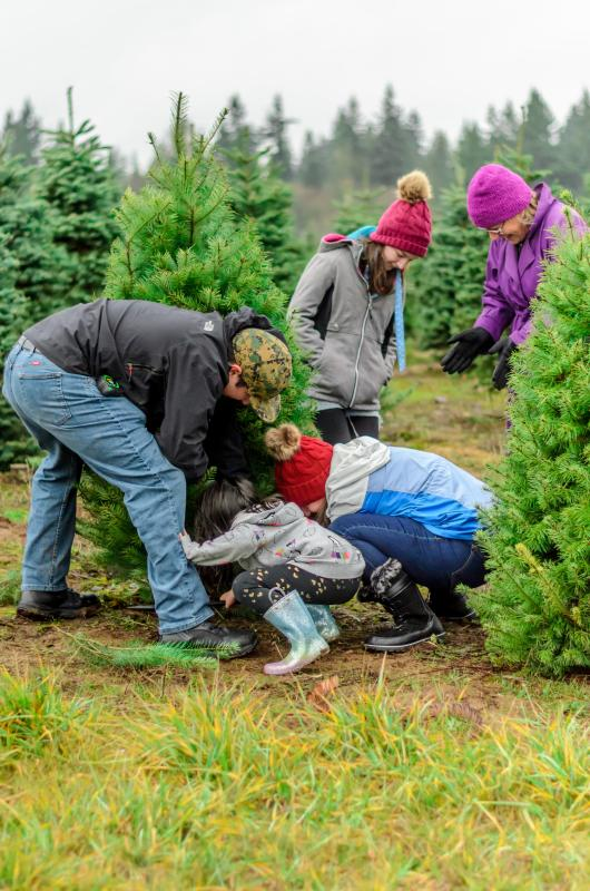 Family picking and cutting a Christmas Tree at a Tree Farm in Half Moon Bay
