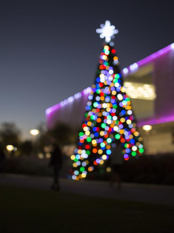 Lowry Park Zoo Christmas.Holiday Season And New Year S Events
