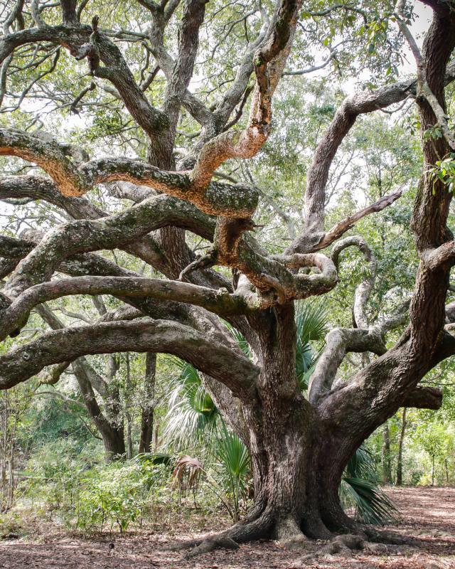 Oak tree, park