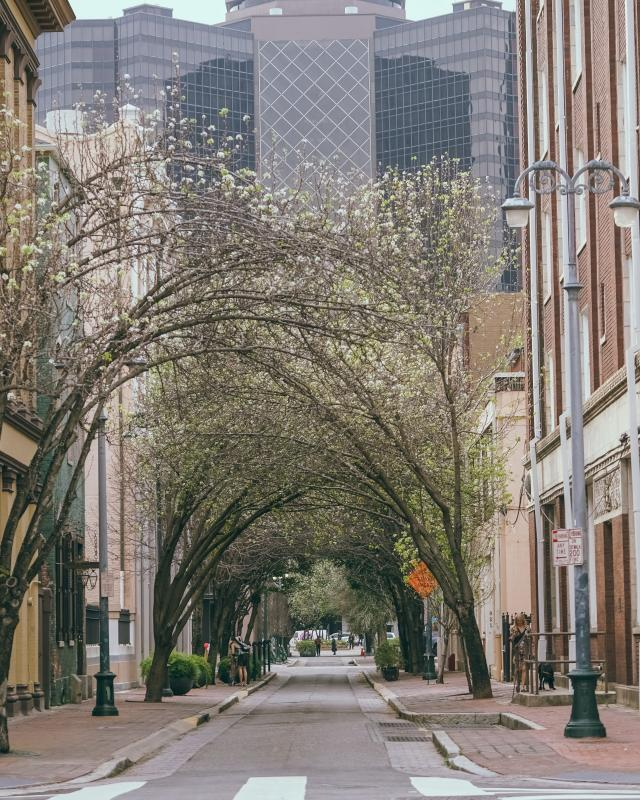Lafayette Street & Baronne Street - Downtown - CBD - Springtime