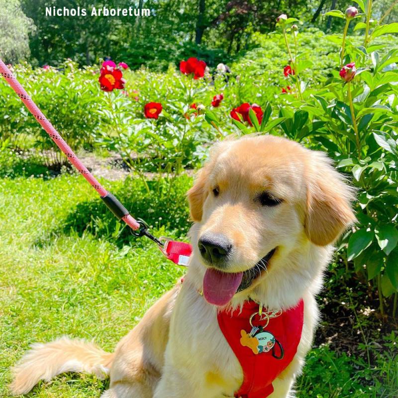 Dog at Nichols Arboretum