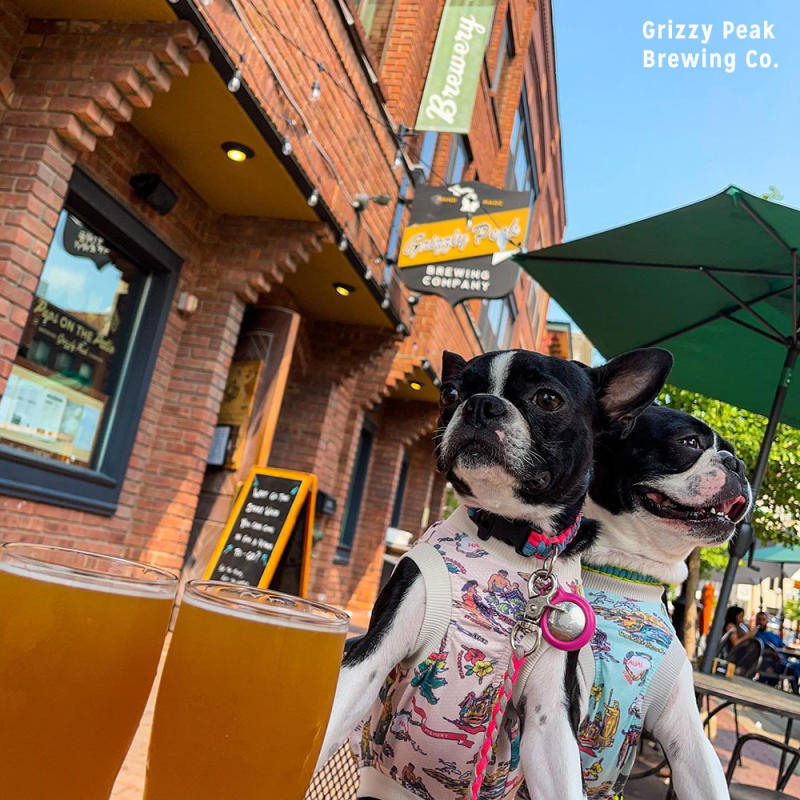 Dogs at Grizzly Peak Brewing Co.
