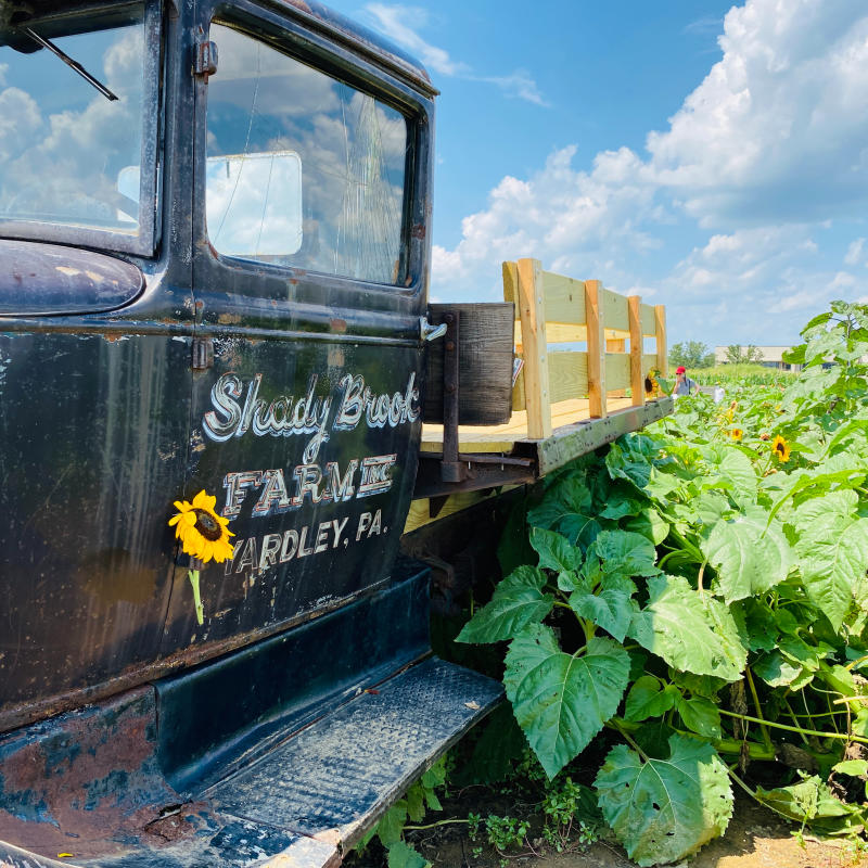Shady Brook Farm blog post
