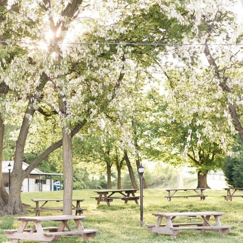 picnic tables under trees