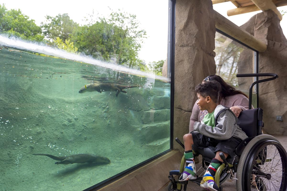 Accessible attractions at the Fort Wayne Children's Zoo