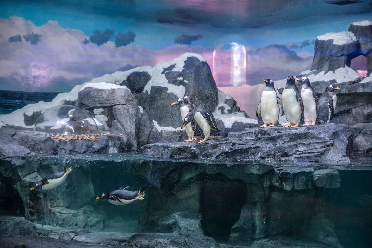 Wonders Of Wildlife Penguin Encounter