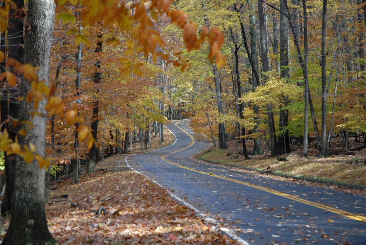 Fall Color Roads