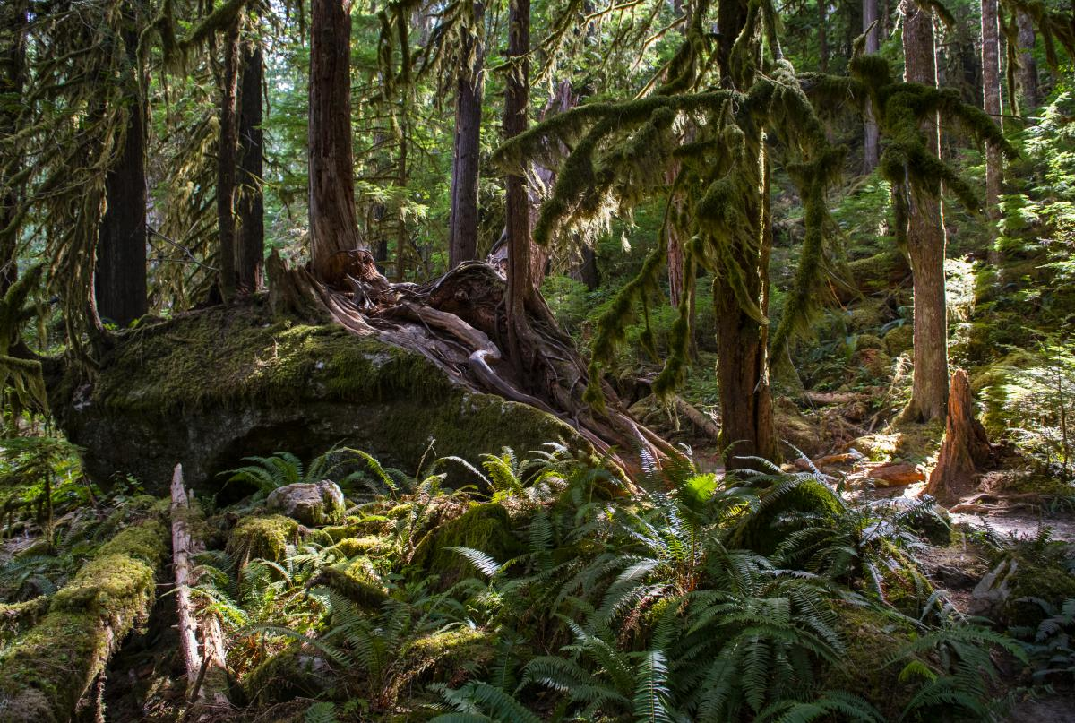 Olympic National Park 2 - Nick Cote