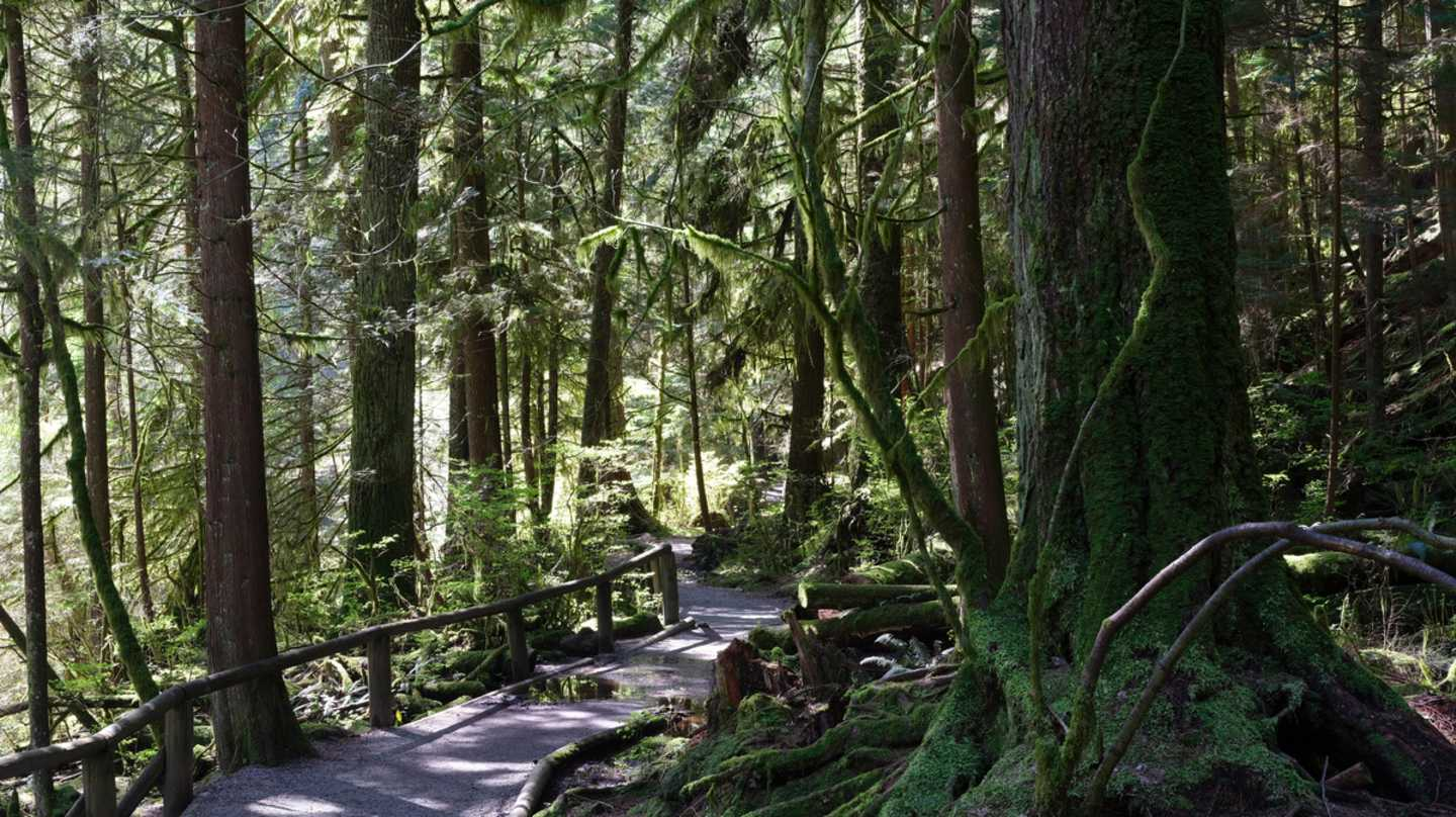 Forest trail North Vancouver