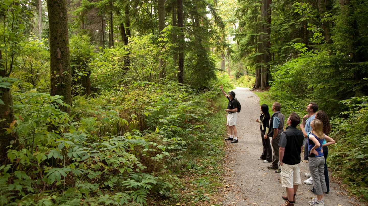 Exploring the forested trails at Stanley Park