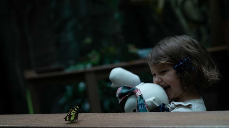 Butterflies at Vancouver Aquarium