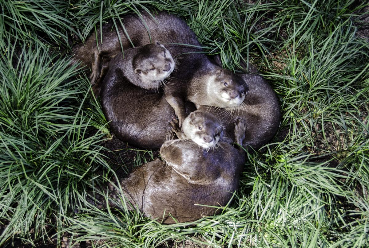 Otters on the Edge
