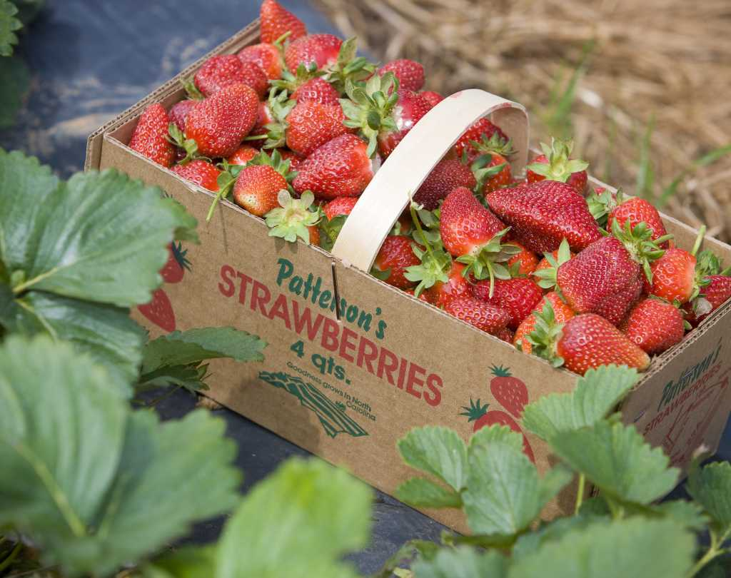 Patterson's Strawberries
