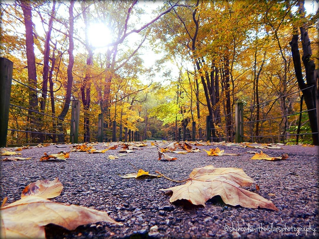 leaves on a paved trail with bright colored trees