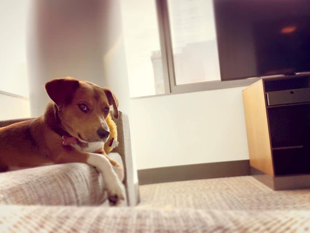 dog relaxing in the hotel room