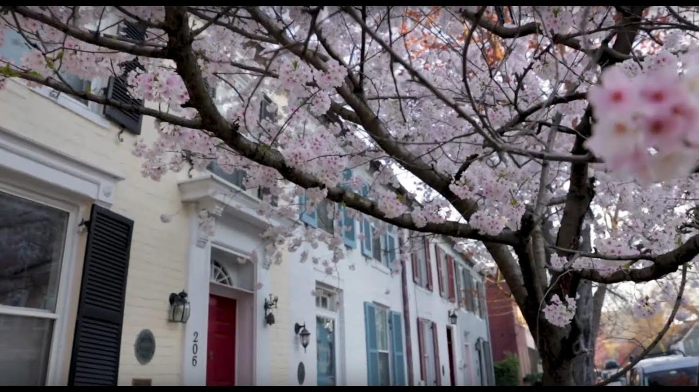 Cherry Blossoms Web Header V2