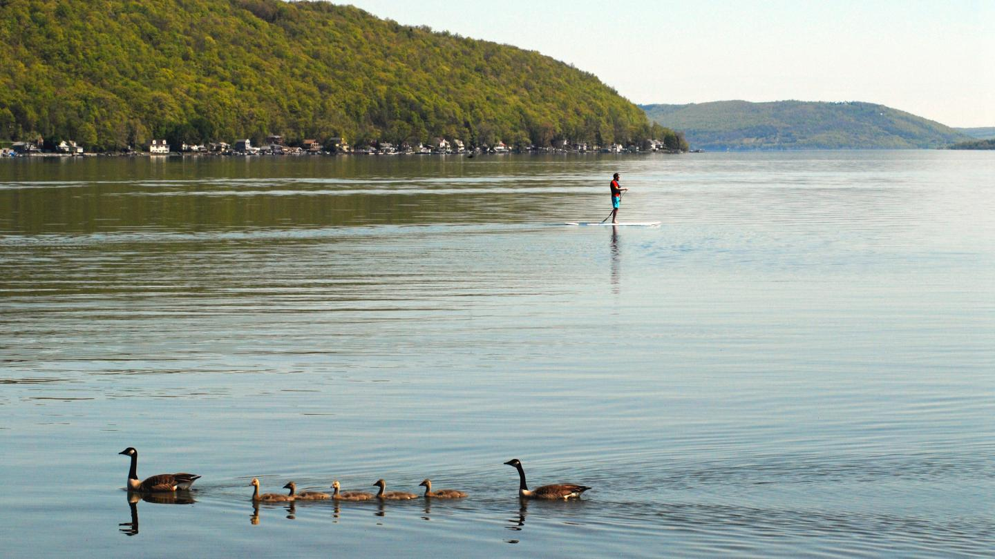 Keuka Lake Paddle Board with Geese