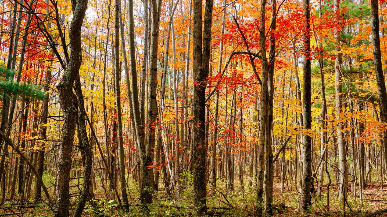 Houghton Land Preserve Fall