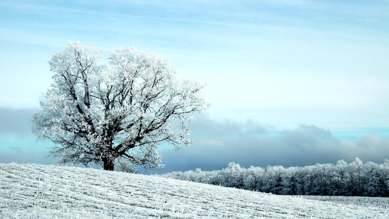 Scenic Snowy Winter Field Vineyard