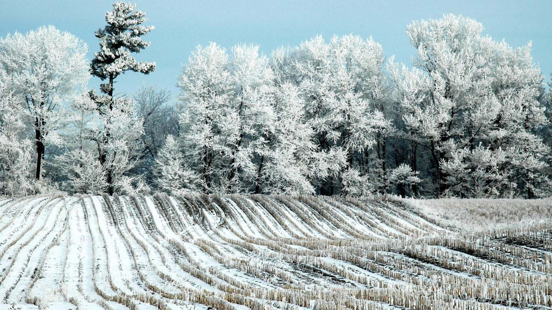 Snowy winter landscape vineyard
