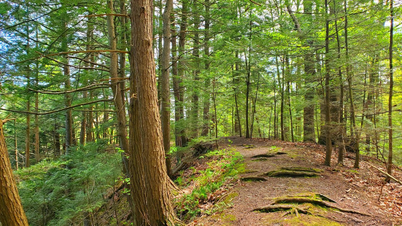 Mitchellsville Gorge Trail