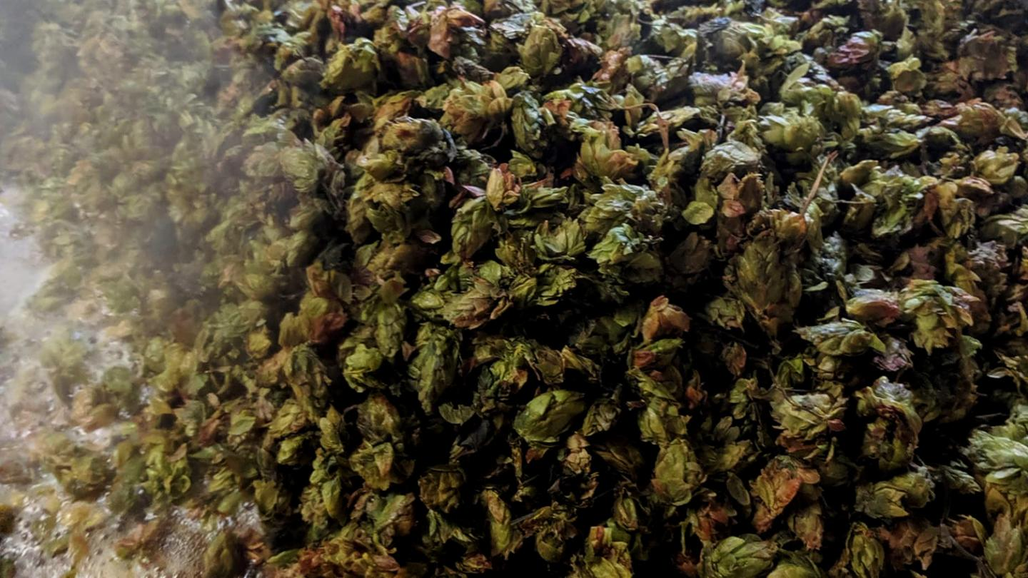 Local Hops The FarmHouse Brewery