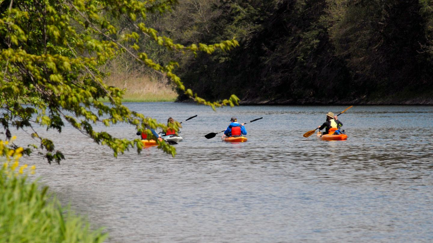 Chemung River Kayaking