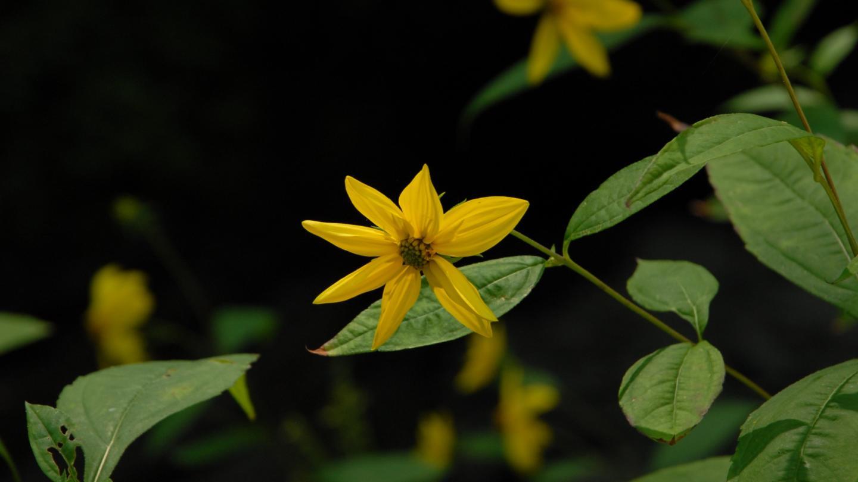Flowers at Watkins Glen
