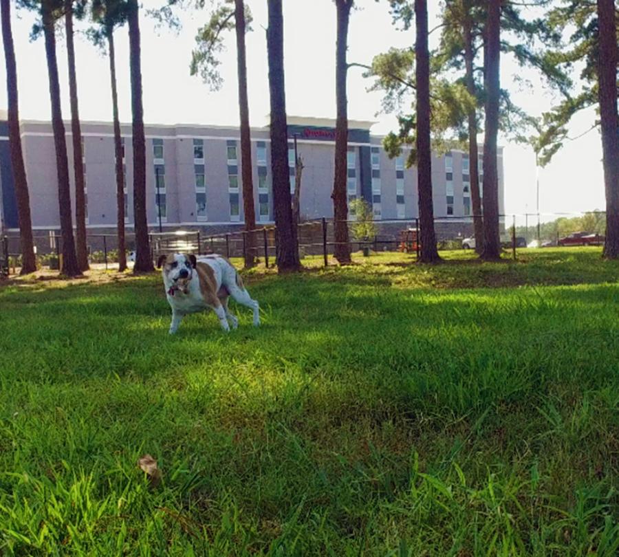 Benson Dog Park located adjacent to the new Hampton Inn & Suites.