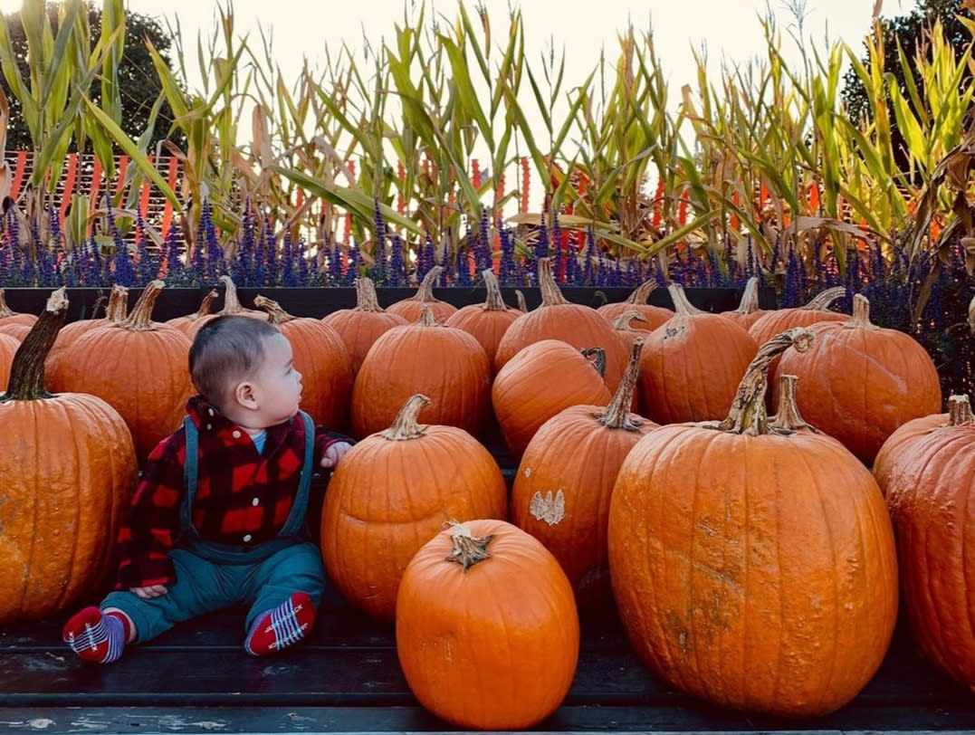 Pumpkin Patch Cox Farms