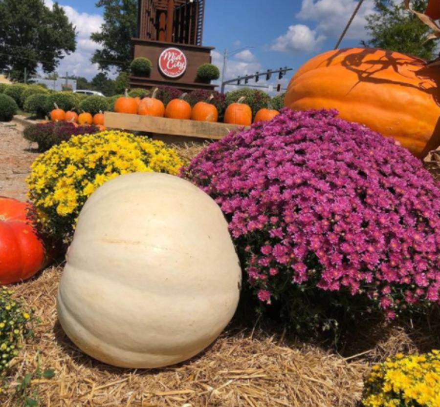 Pumpkin patch at midcity