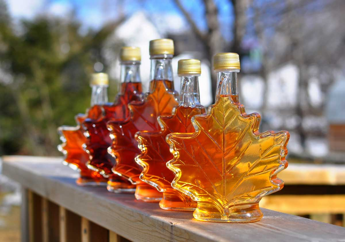 maple syrup season in the spring