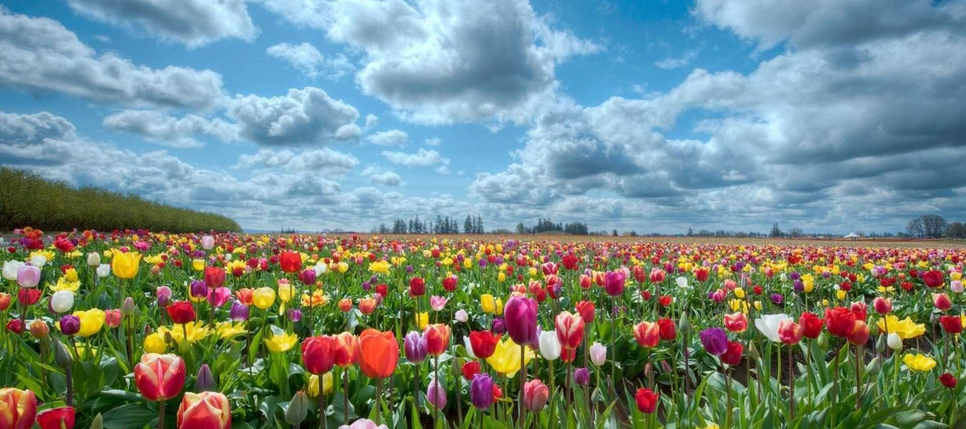Flower Fields For Family Photos