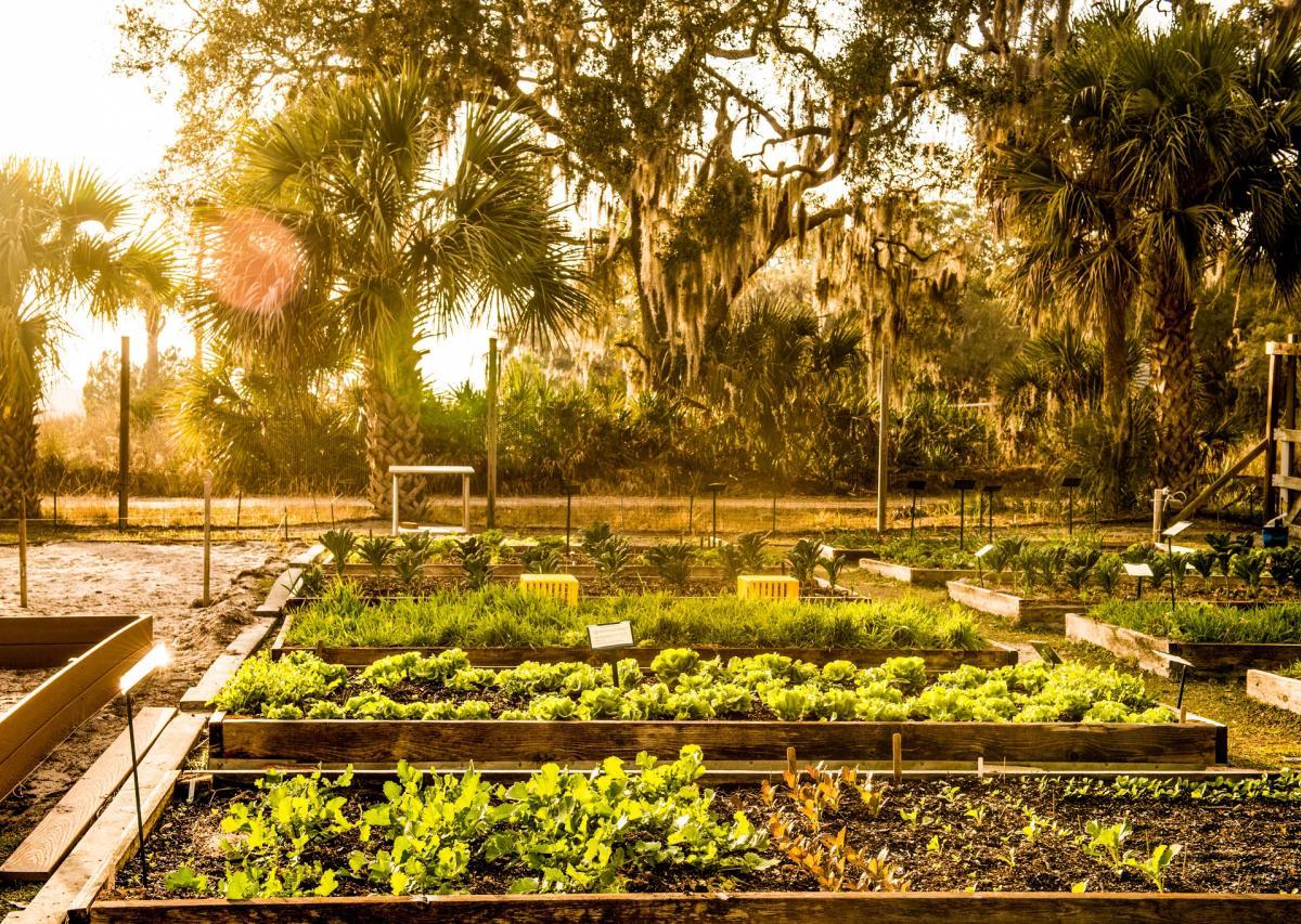 Organic Garden In The Golden Isles Of GA
