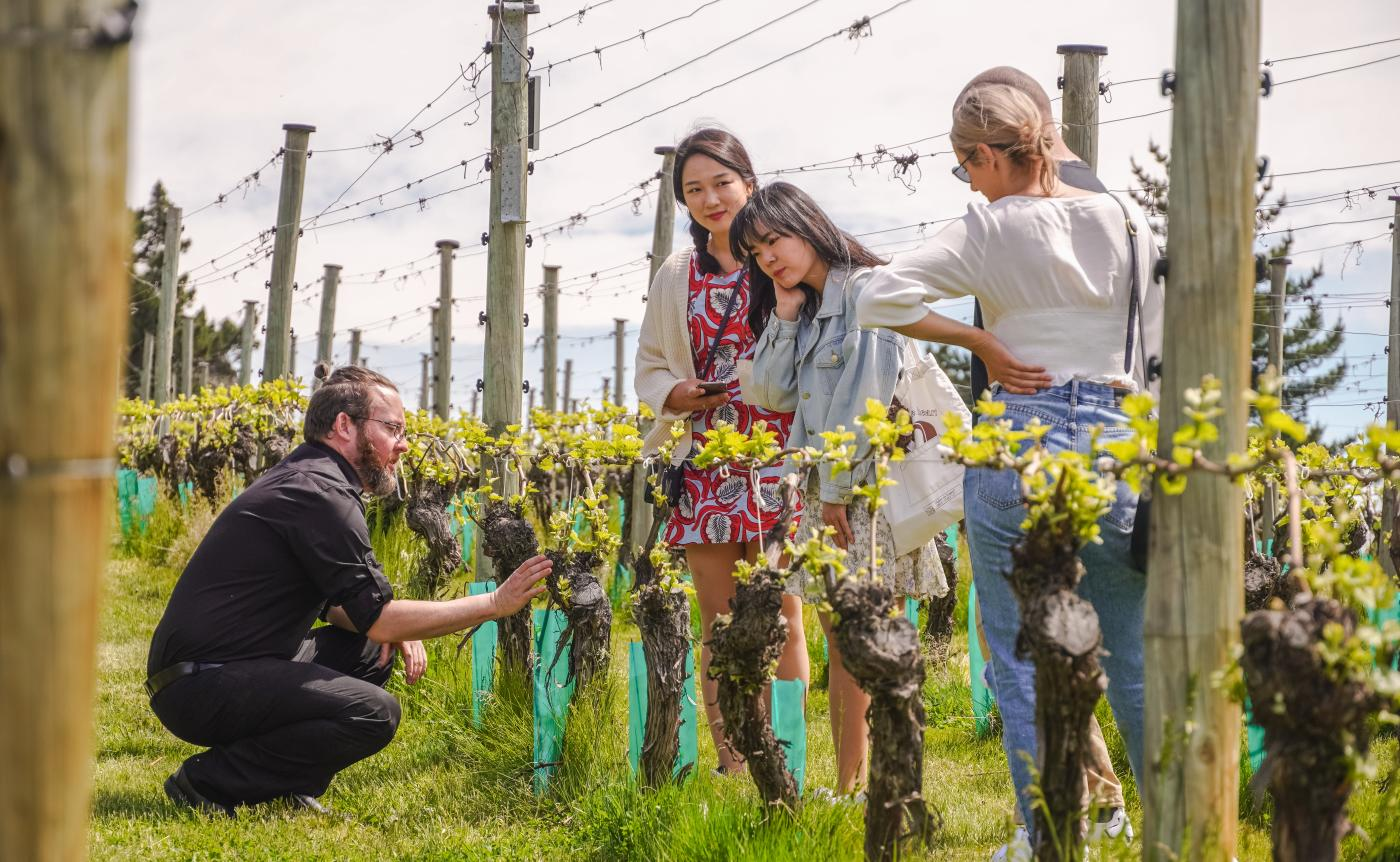 Gibbston Valley Winery tour - Homeblock vineyard