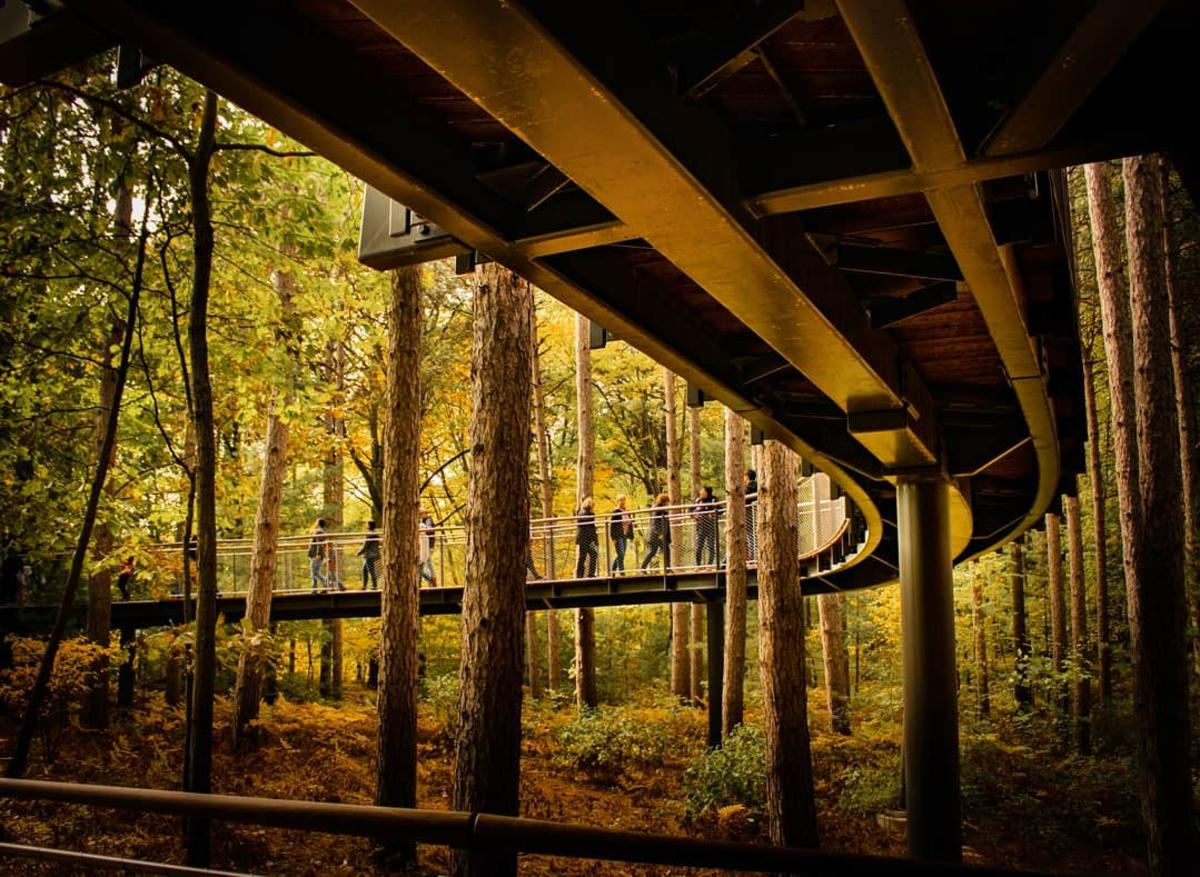 Unique view from beneath the nation's longest canopy walk at Whiting Forest of Dow Gardens in Midland